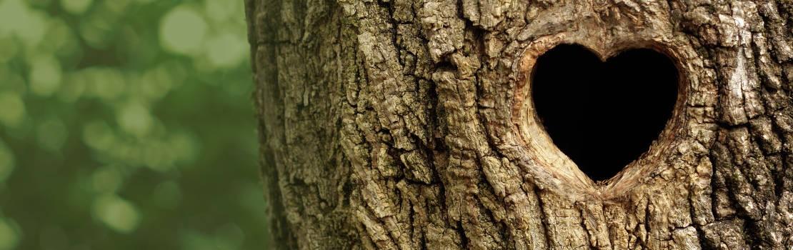 Holz liegt uns am Herzen